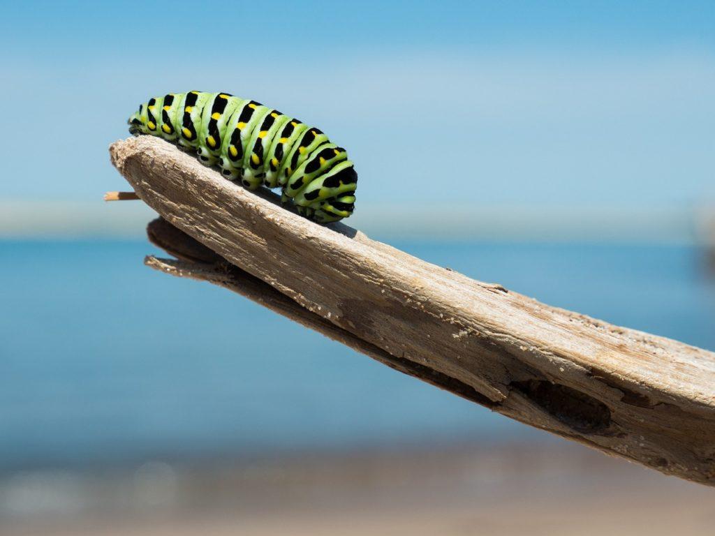 caterpillar 1209834 1280