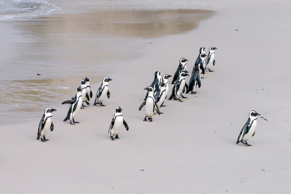 penguin 1719608 1280 1